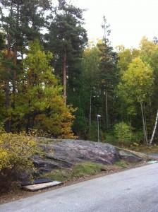 Berghemskogen
